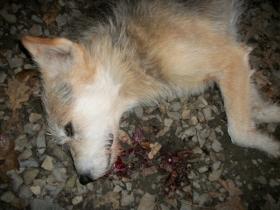 Проти міліціонера, який розстрілював собак, відкрите провадження