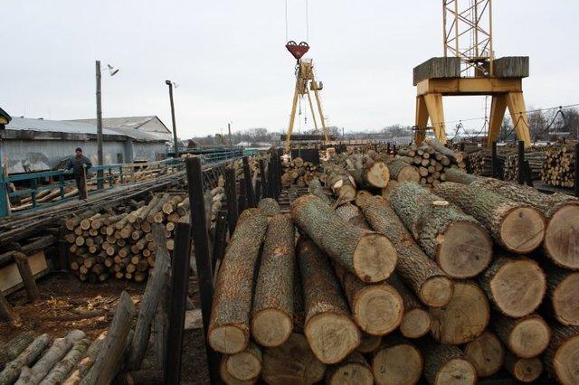 Мораторий на экспорт леса предлагают заменить увеличением штрафов за незаконную вырубку