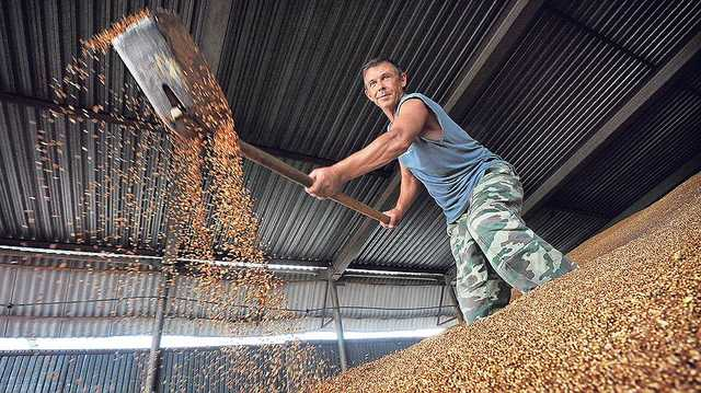 Украину присыпало российским зерном