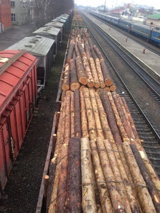 Украинские Карпаты вырубают ежедневно по 300 вагонов в день. Кто покупатель и как это остановить